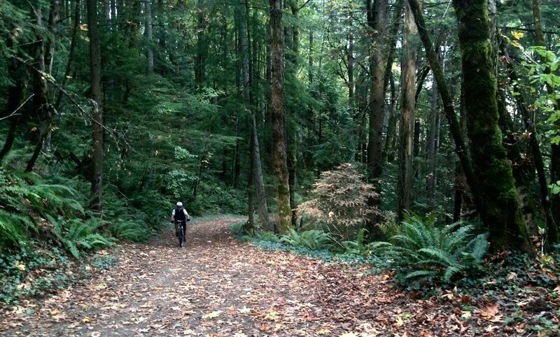 A bicyclist makes his way up Holman Lane on an autumn day.