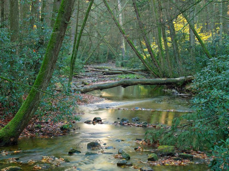 Alan Seeger Natural Area.