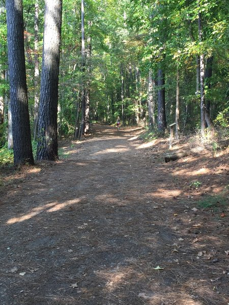 The section of trail on the north side of Lake Johnson follows a maintenance access road and is very wide and flat.