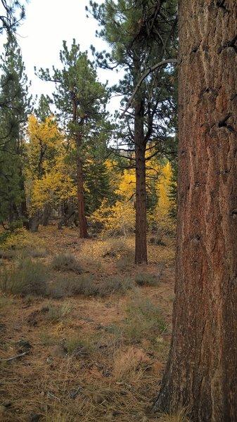 Fall colors follow Thomas Creek.