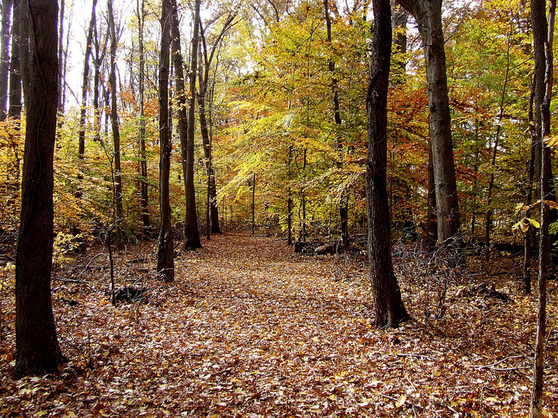 The nature trail through the old growth woods provides excellent up close viewing of habitat and wildlife of all forms.
