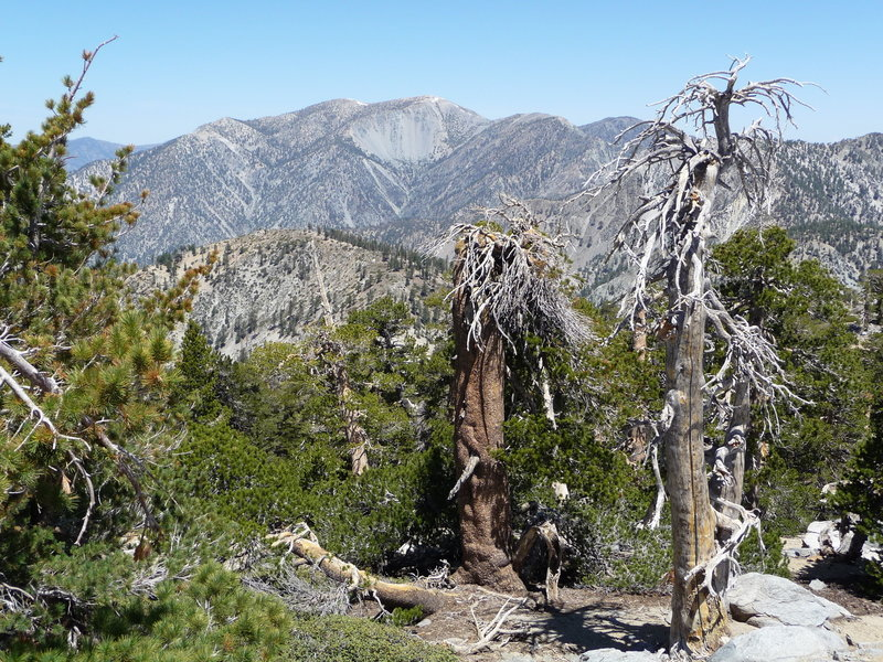 View of Mt Baldy from the Cucamonga Trail.