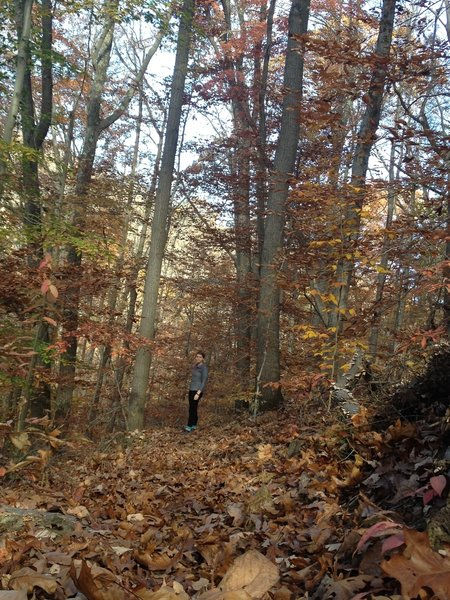 Hiking the Greenwood during autumn.