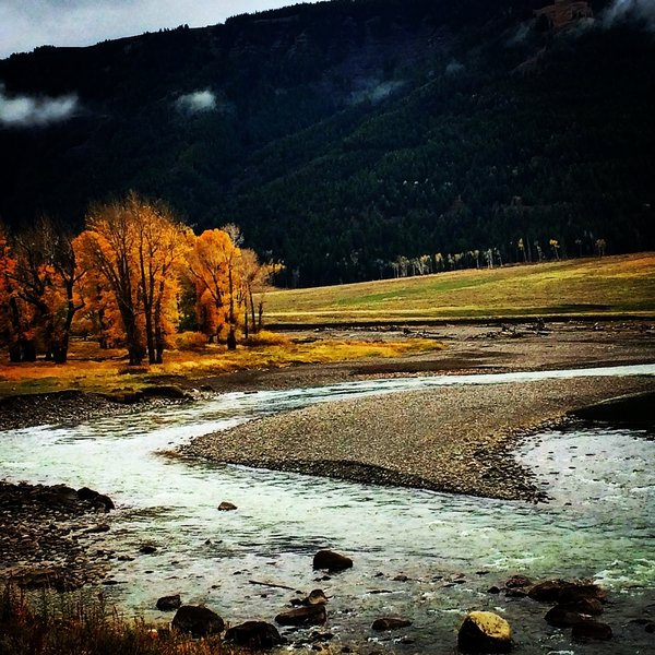 Fall colors in the Lamar Valley near the Specimen Ridge Trail.