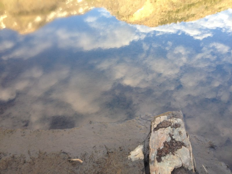 Even reflections can be inspiring, like this one found in one of the small beaver ponds up Broads Fork.