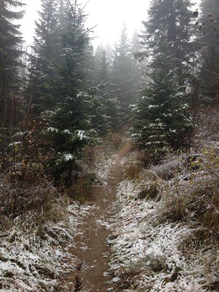 Nice fall hike up Stevens Creek Trail.