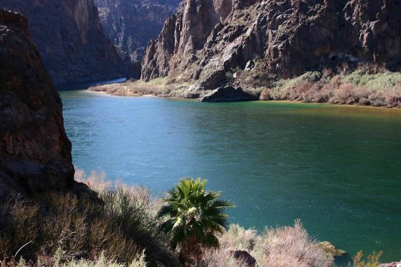 Lone Palm on the Colorado River.