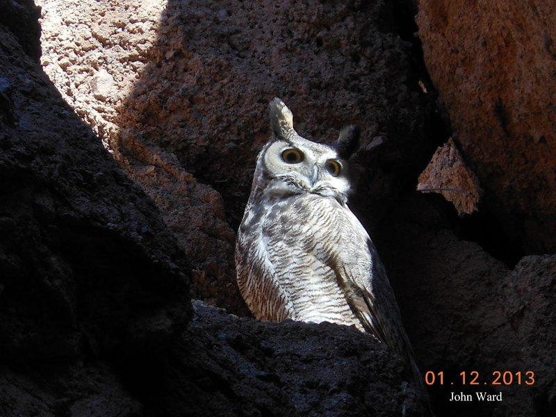A white owl peers at the White Owl Trail.