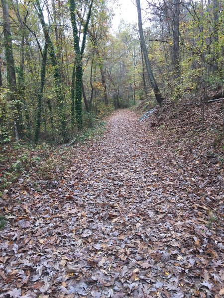 Upper Trail portion of Battle Branch Trail -- wide, straight and flat! This segment is more likely to be dry, compared to the Lower Trail portion, after rains.