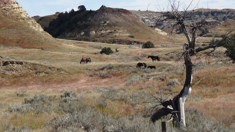 Wild horses ahead of us on the trail.