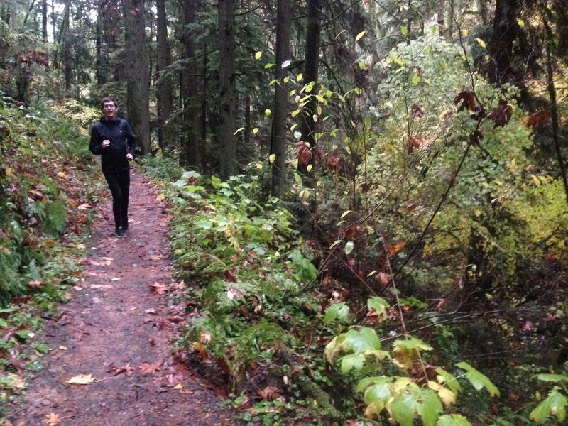 A runner makes his way along the Maple Trail. The trail is very popular as it runs a little over three miles through the heart of Forest Park. It is very diverse in its offerings of elevation change and varied flora and fauna.