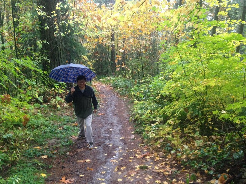 A hiker enjoys a walk in the rain at the point where Fire Lane 2 crosses into a short section of private property near Skyline. There is only room for two or three cars at the side of the road. The trailhead can be difficult to find, but is marked by a double gate in a chain link fence.