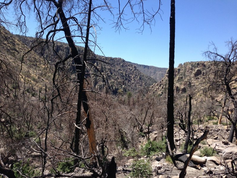 Hiking through burn area from 2011 Horseshoe Two fire.
