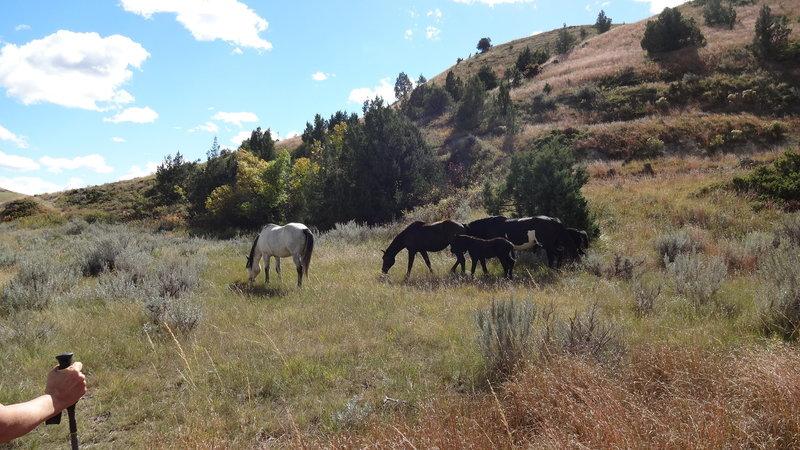 Horses along the way also seem to enjoy the Jones Creek Trail.