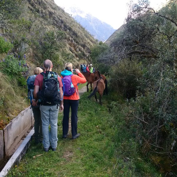 Horses along the trail. They are not wild, but they do run free. Give them lots of space, as they can be dangerous. Note the irrigation system - this is the route of the original Inca irrigation system.
