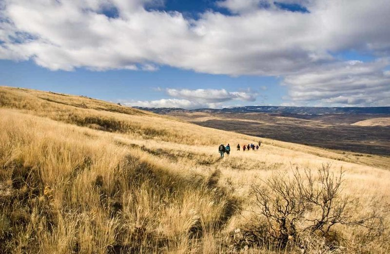 View of hikers travelling through the native grasses of our Shrub-Steppe.