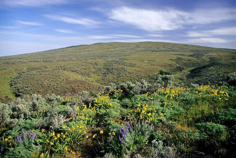 Spectacular wildflowers going up Cowiche Mountain.