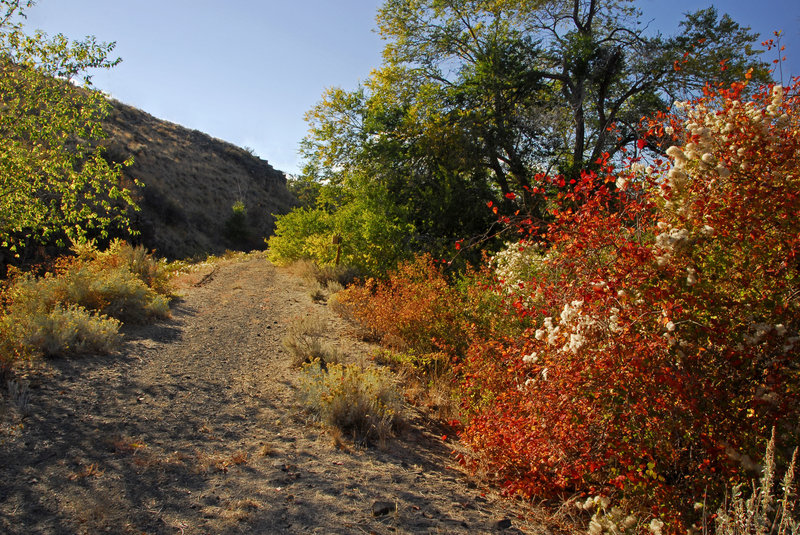 Riotous fall color along an old irrigation canal ditch bank.