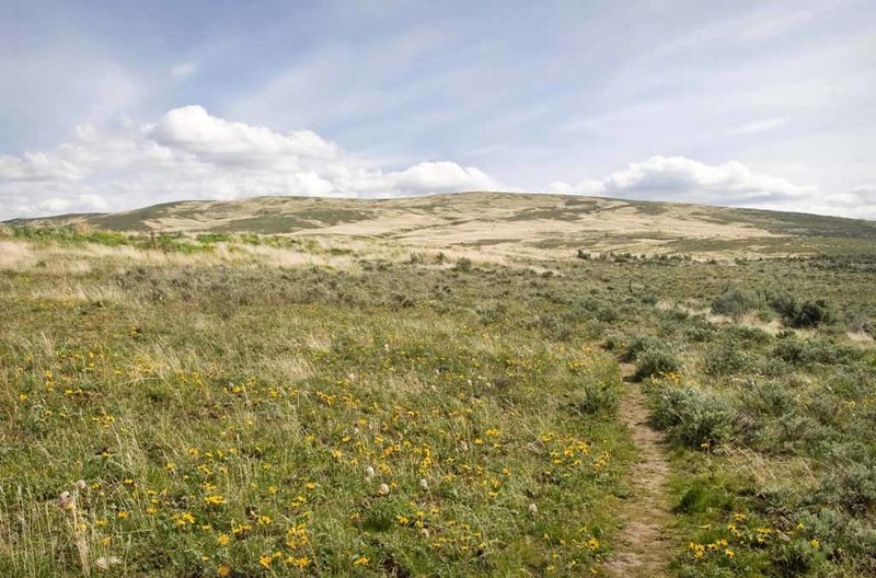 The abundant wildflowers share the stage with Cowiche Mountain.