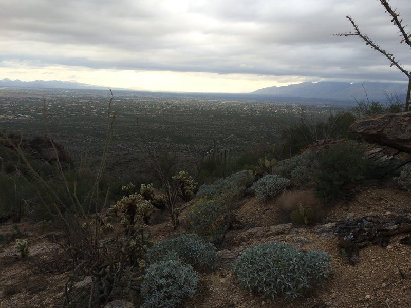 Tanque Verde Ridge Trail, Saguaro National Park, on an overcast day.