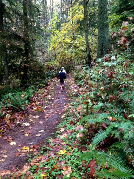 Two runners make their way along the Widlwood Trail on a wet Autumn day.