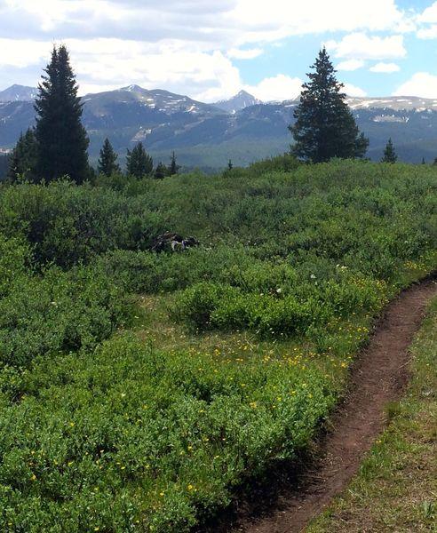 Near the start of Wilder Gulch Trail