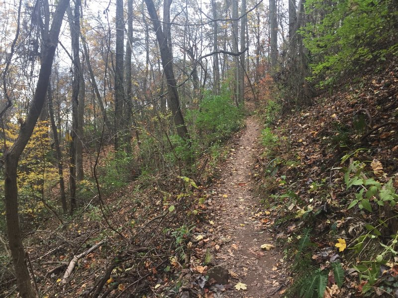 The beginning of the gradual ascent to Crest Trail via the West Overlook Trail.