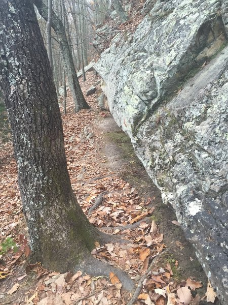 Some parts of the House Mountain trail are narrow and close to or on top of rock formations.
