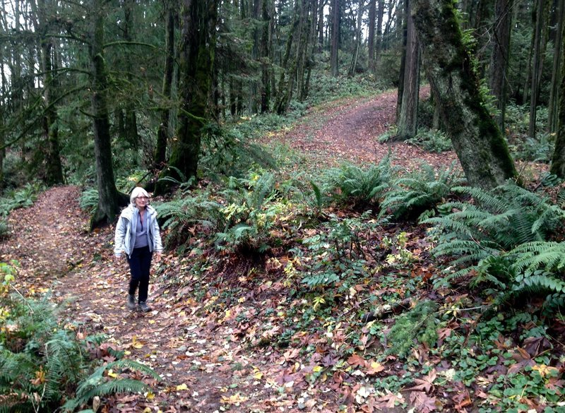 A woman hikes the Wildwood Trail at the point it intersects with Fir Lane 1, which can be seen in the upper right. The are is very family-friendly as it has easy excess to a wide clearing with picnic tables.