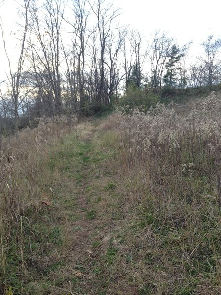A grassy area at the top of the hillside of Glendale Trail before descending.