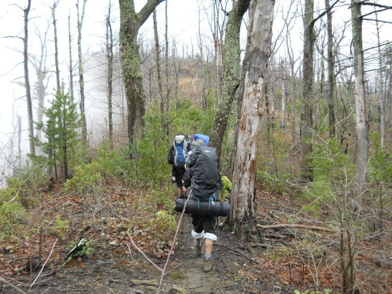 Hiking along the Shortoff Ridge, there are many dead trees from forest fires and beetle infestations.