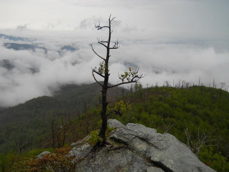 The clouds linger below the mountains in Linville Gorge on a crisp fall morning.