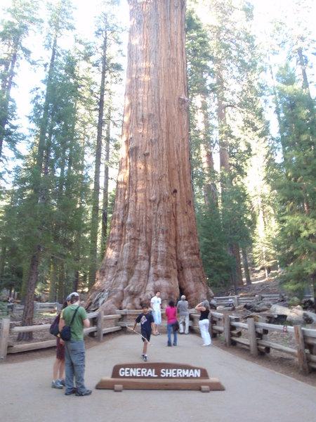General Sherman Tree. Sequoia National Park.