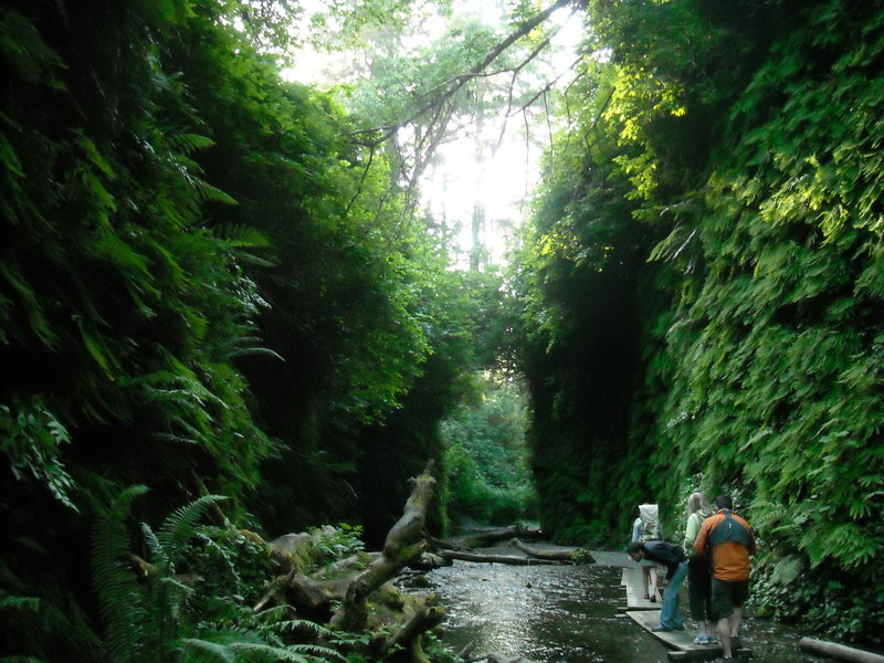 The last portion of trail on the way to Fern Canyon in Redwoods State Park.