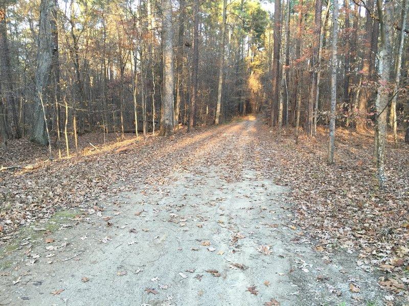 Cedar Ridge Trail in Umstead State Park.