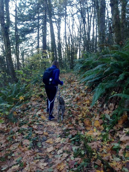A hiker and her dog make their way along the Wildwood Trail on a fall afternoon hike in November.