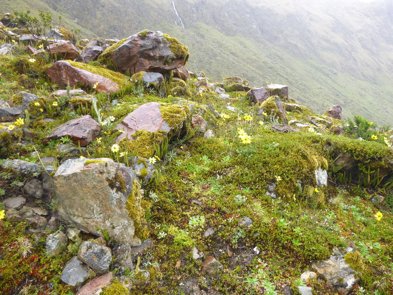 This part of the hike is in the Cloud Forest.  Moss abounds, and wildflowers (this was in late March).