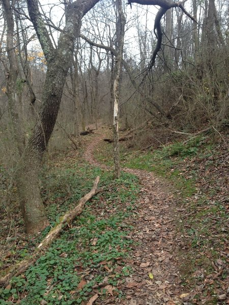 Twists and turns keep you on your toes on the Ray Lang Trail.