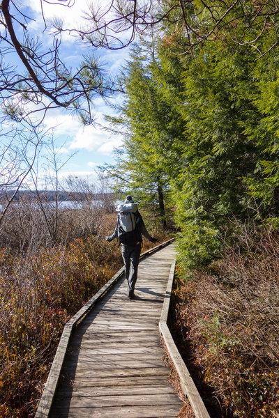 Hiker on the Bog Trail