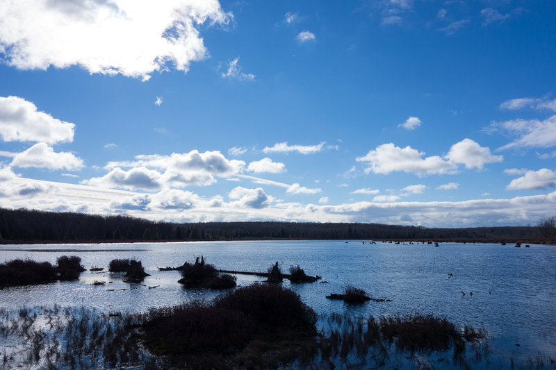 View of Black Moshannon Lake from the Bog Trail.