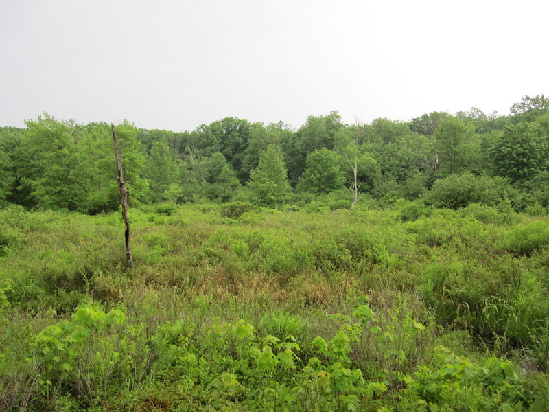 Moshannon Bog as seen from the Moss-Hanne Trail.
