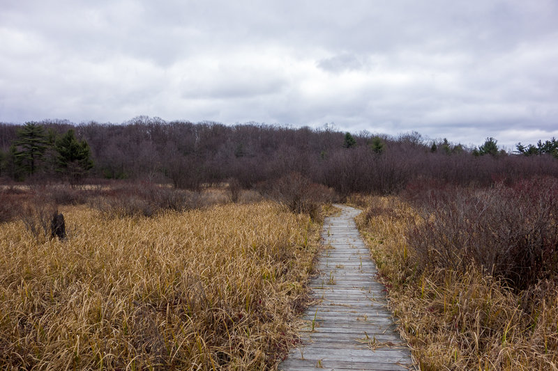 Bog boardwalk on the Moss-Hanne Trail