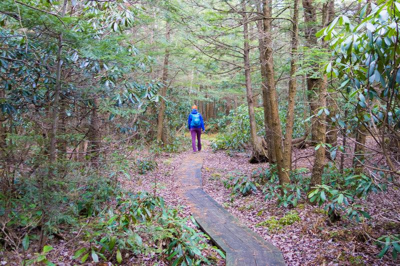 More boardwalk on the Moss-Hanne Trail.