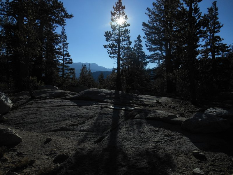 Morning sun through the trees on the Evelyn Lake Trail.