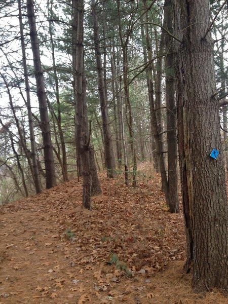 The pine tree laden hilltop overlooking the I-77 highway.