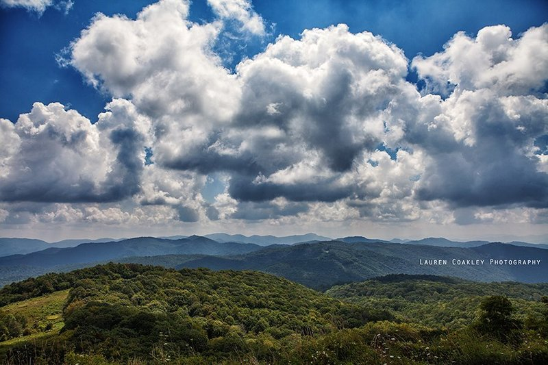 A sea of forest extends in all directions from Max Patch Mountain.