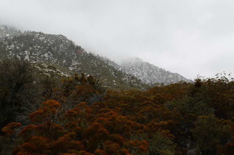 Heavy vegetation at this elevation, dry creek may flow in spring and winter