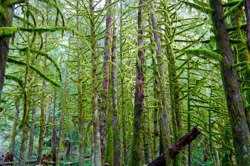 """The """"Dreadlock Forest"""" on the hike up to the Heybrook Lookout Tower."""