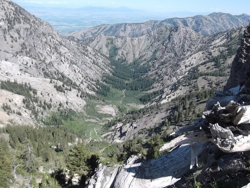A view down into Birch Canyon and, farther back, Cache Valley as seen from the Naomi Peak National Recreation Trail.