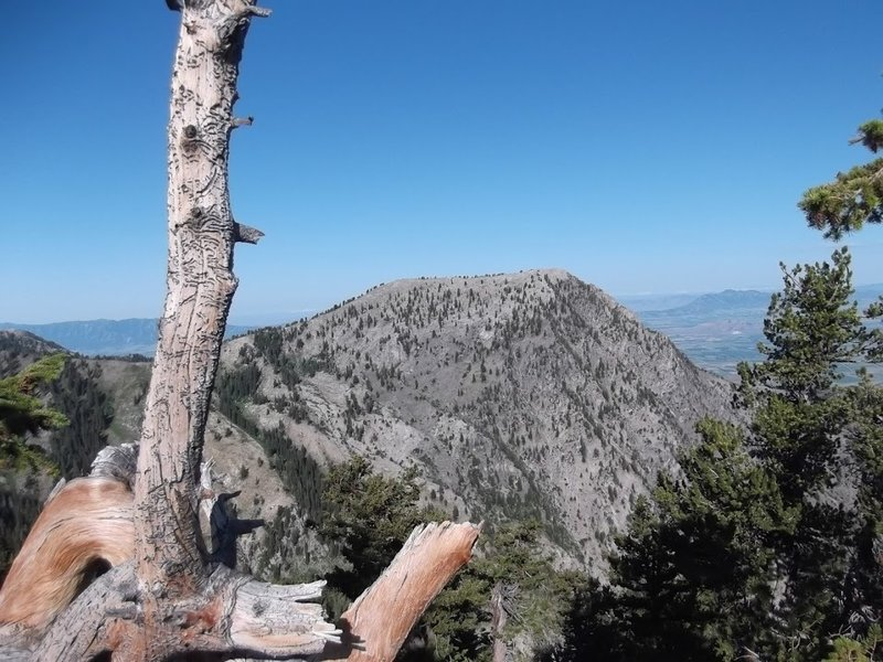 A view of the backside of Flattop from the Naomi Peak National Recreation Trail.